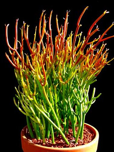 17 комнатных растений, в существование которых Вы не сможете поверить!